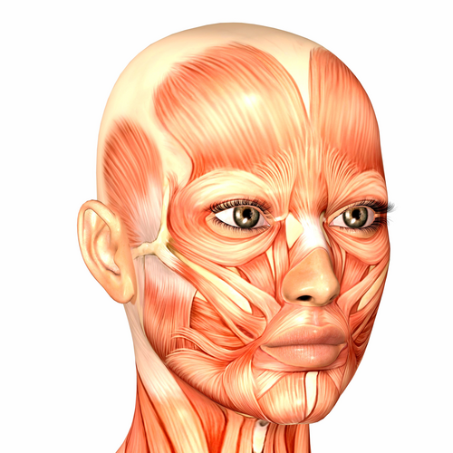 yuz-kasları-face-muscle