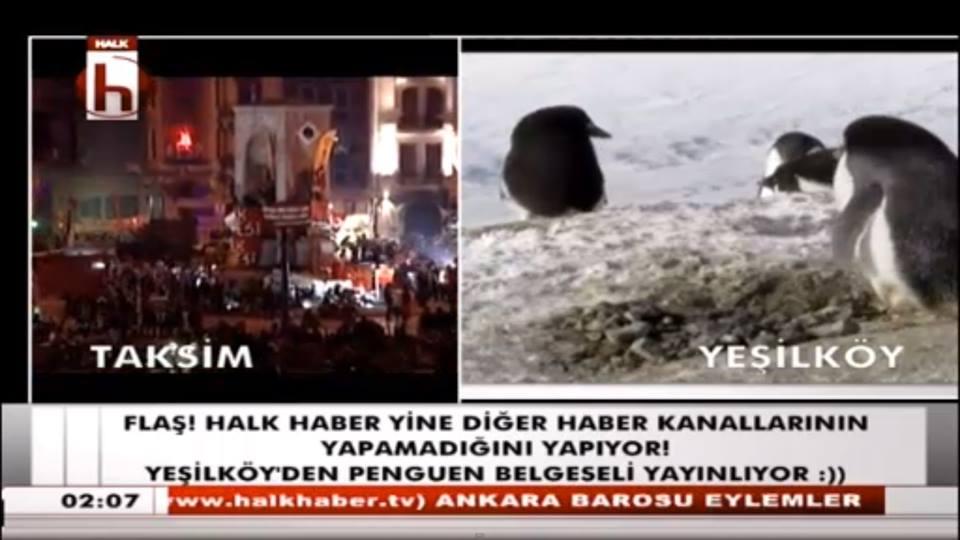 halk-tv-penguen-ataturk-havalimani