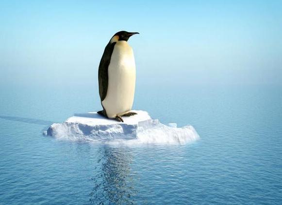 penguen-cnn-turk-duran-adam