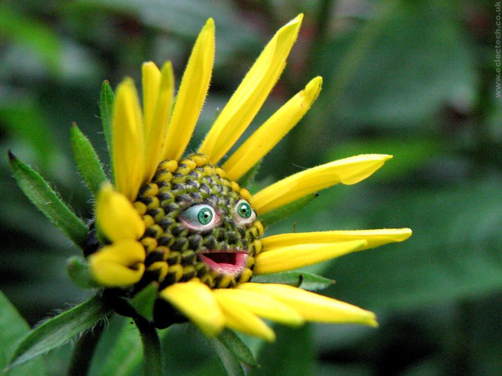ig-nobel-odulleri-award-happy-plant-mutlu-bitki