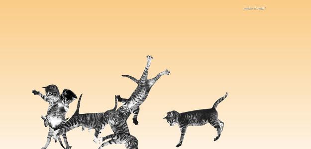 kedi-ziplatmaca