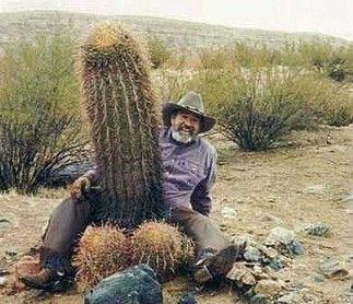 penis-kaktus