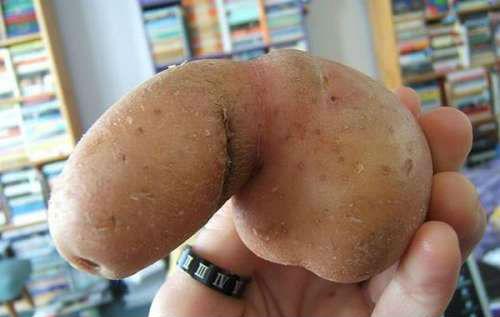 penis-patates-sekli