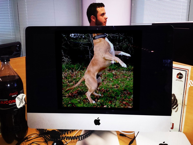 ronan-desk-dog