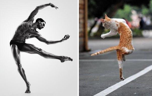 balet-kedi