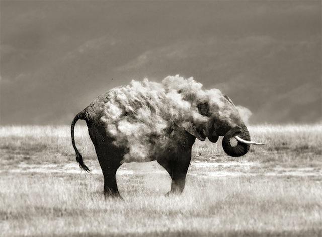 havalı-fil
