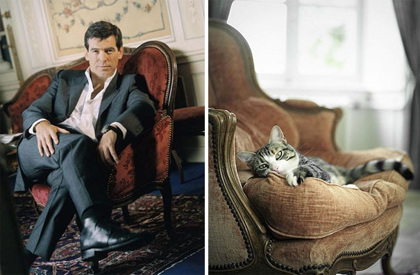 james-bond-kedi