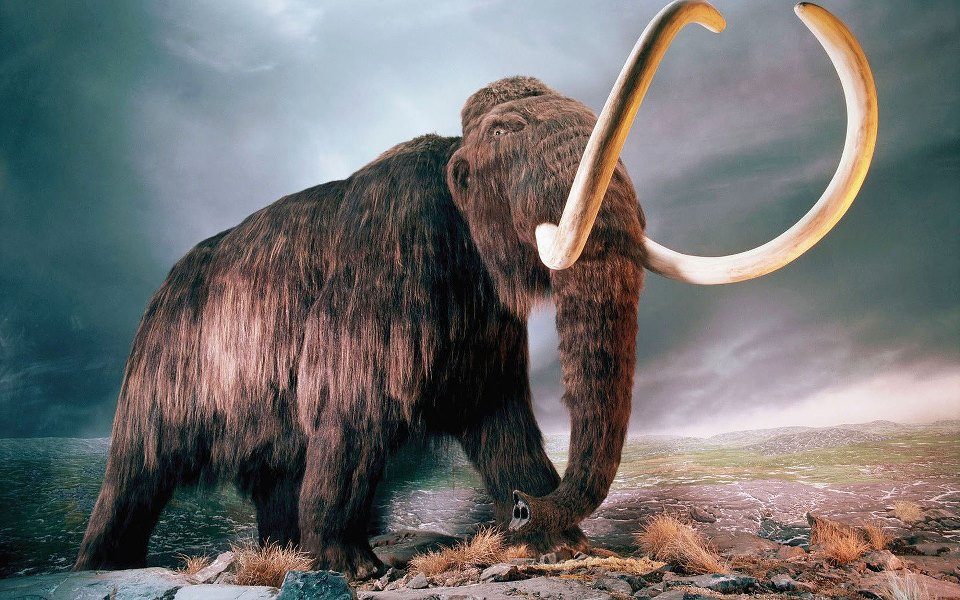 mamut-geri-donuyor