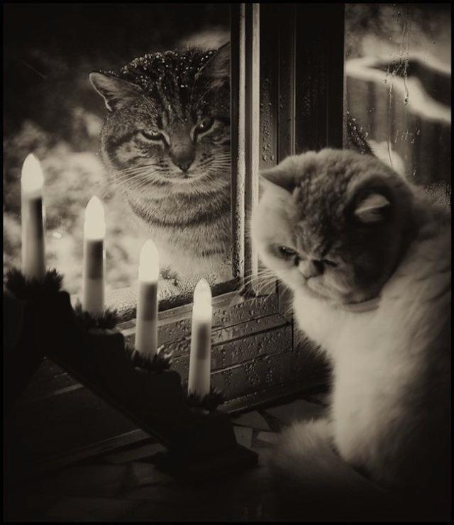 romantik-kedi