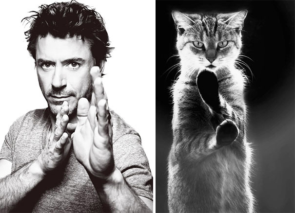 robert-downey-kedi