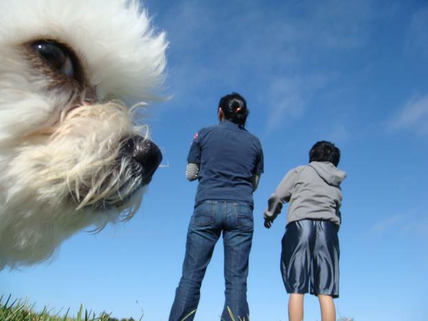 sevimli köpekler (1)