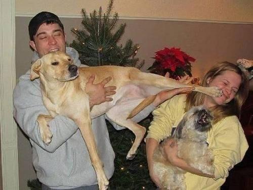 sevimli köpekler (5)