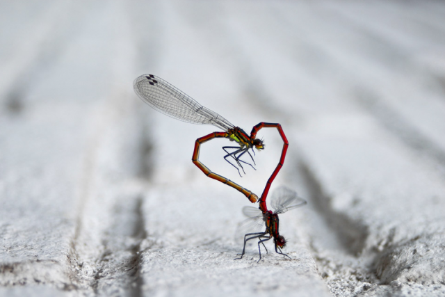 sineklerin-ilani-aski