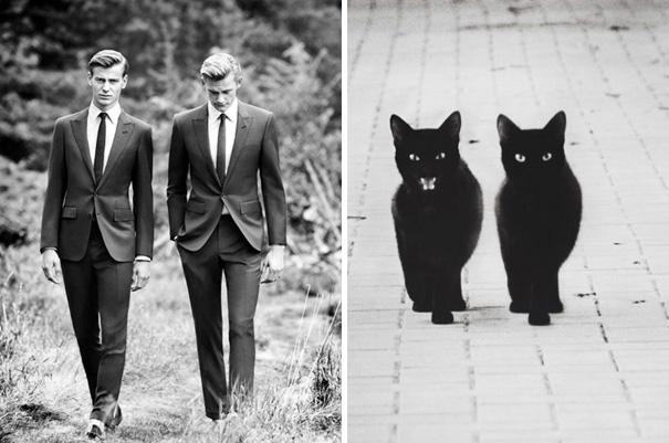 takim-elbiseli-mankenler-kediler
