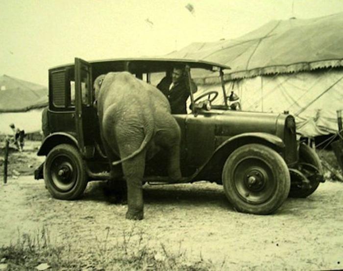 arabaya-giren-fil