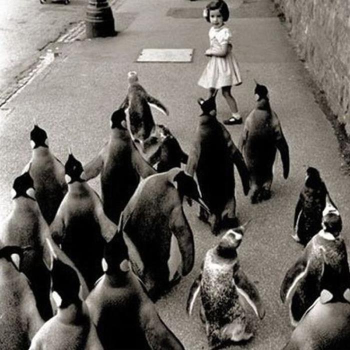 cocuk-kovalayan-penguenler