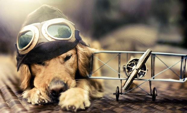 pilot-kopek