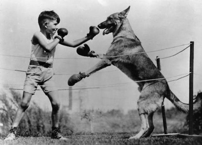 kopekle-boks-yapan-cocuk