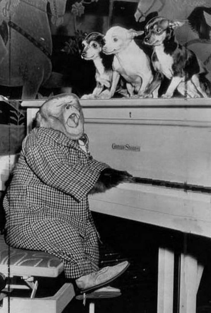 piyano-calan-maymun
