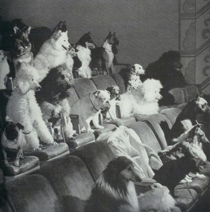 sinema-salonundaki-kopekler