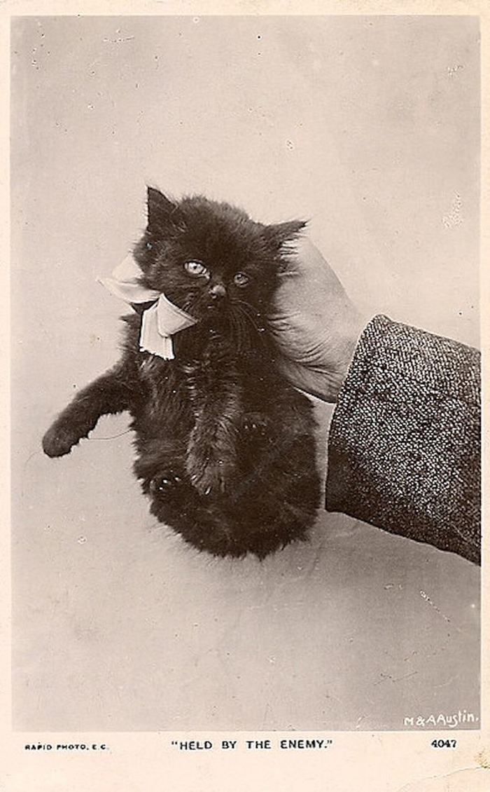 siyah-kedi-fotografi