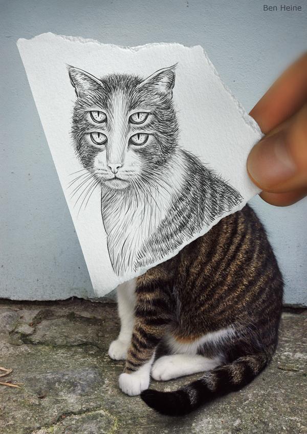 33-dort-gozlu-kedi-fotograf-kara-kalem