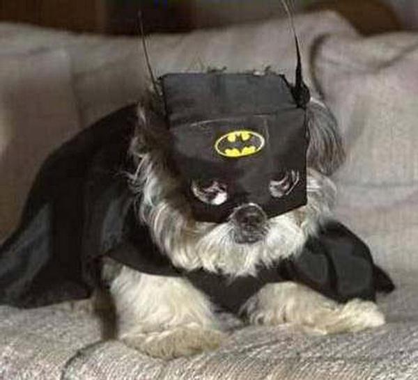 ben-affleckden-daha-iyi-batman-kedi