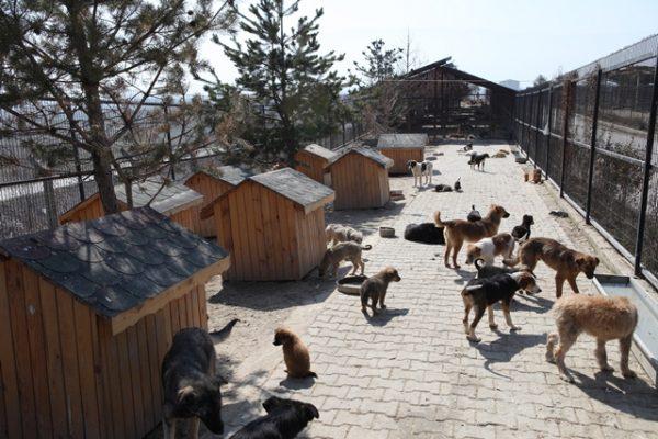 bolu-belediyesi-hayvan-barinagi