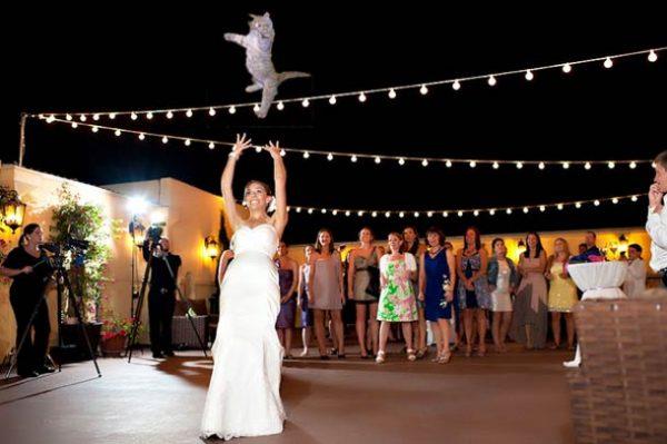 brides-kedi-firlatiyor