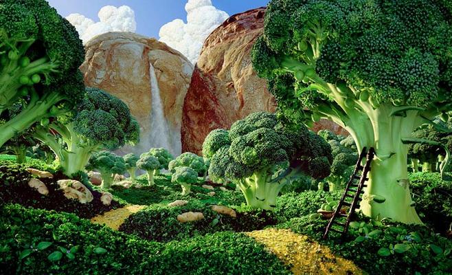 brokoli-ormani-gida-manzaralari
