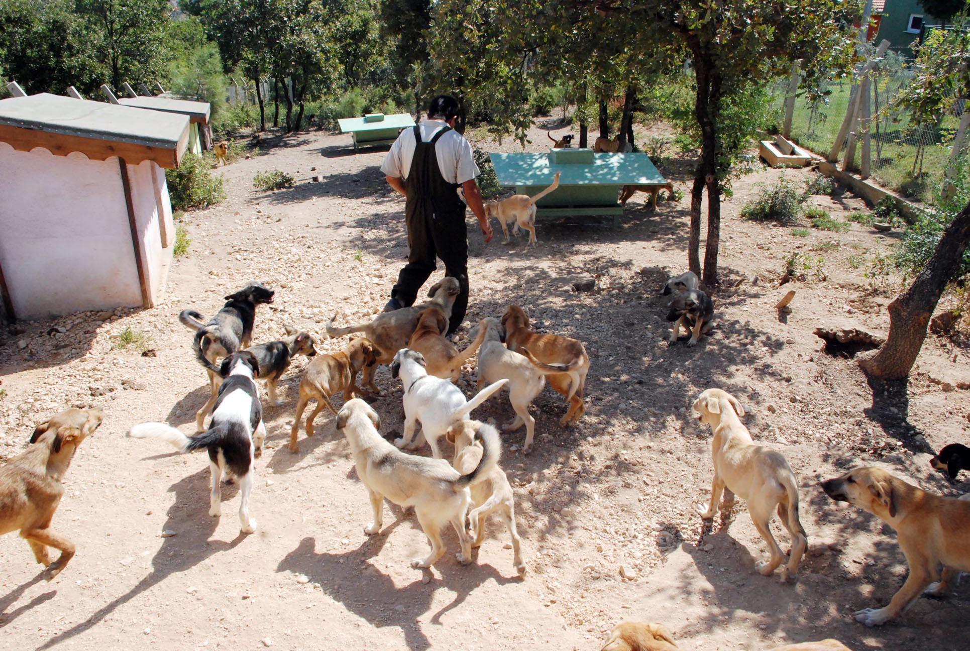 türkiye hayvan barınakları