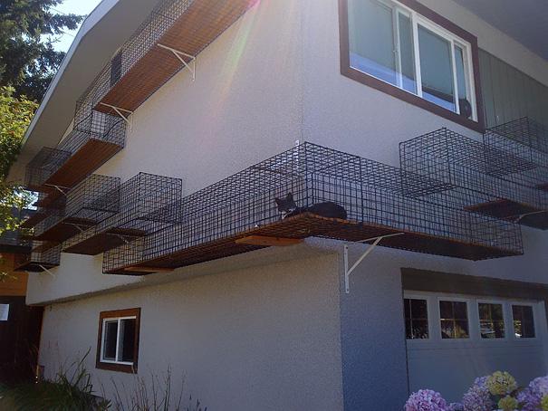 evde kedi yolu