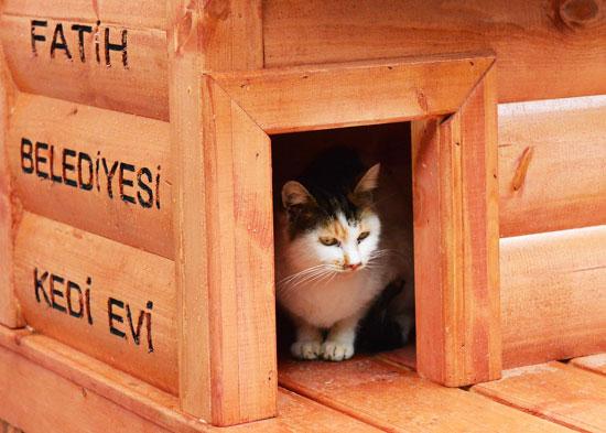 fatih-belediyesi-kedi-evi