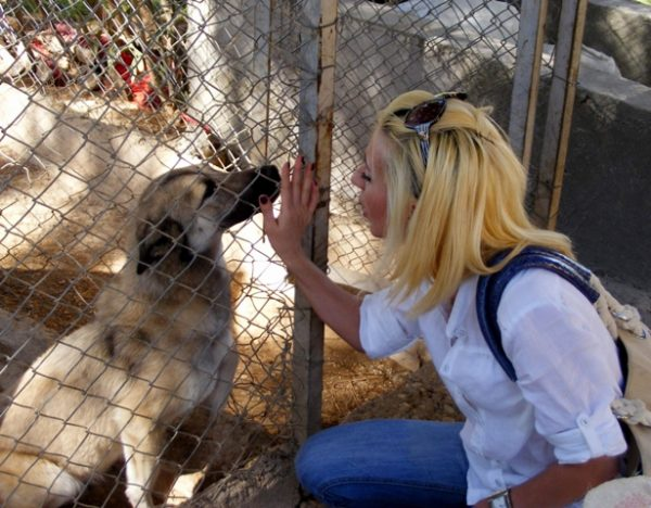 hayvan-barinagi-kopek-sevgisi
