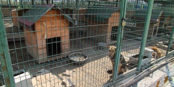 Istanbul Daki Ve Turkiye Deki Hayvan Barinaklari Listelist Com