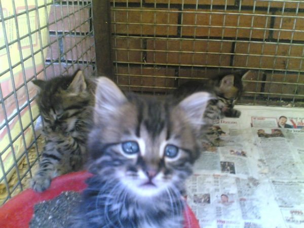 kedi-hayvan-barinagi