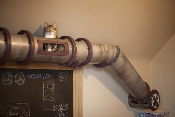 kedi yolu ev