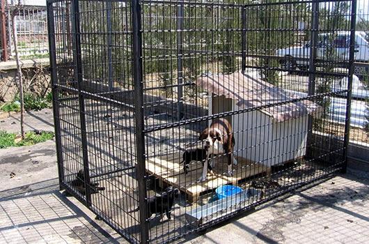 kopek-barinaklari-kafes