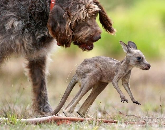 kopek-kanguru-fotograf