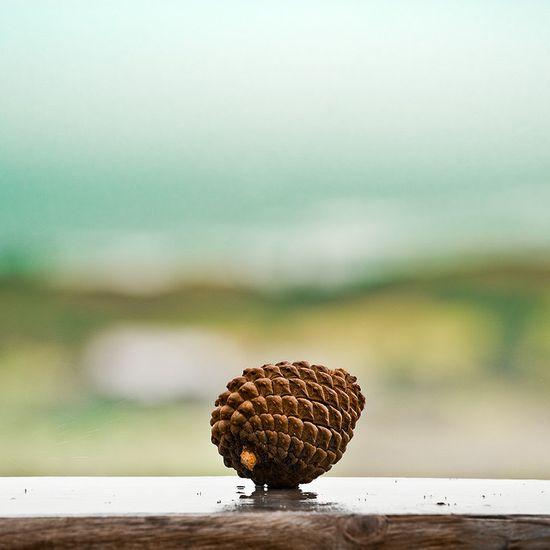 kozalak-fotografi-minimalist
