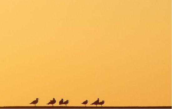 kus-surusu-fotografi-minimalist