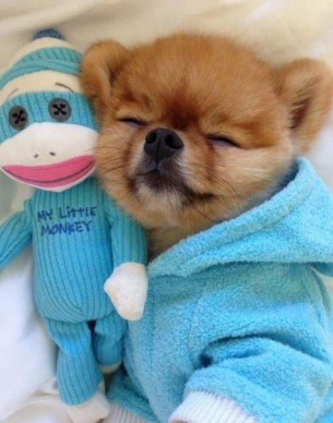 mavi-pijama-kopek