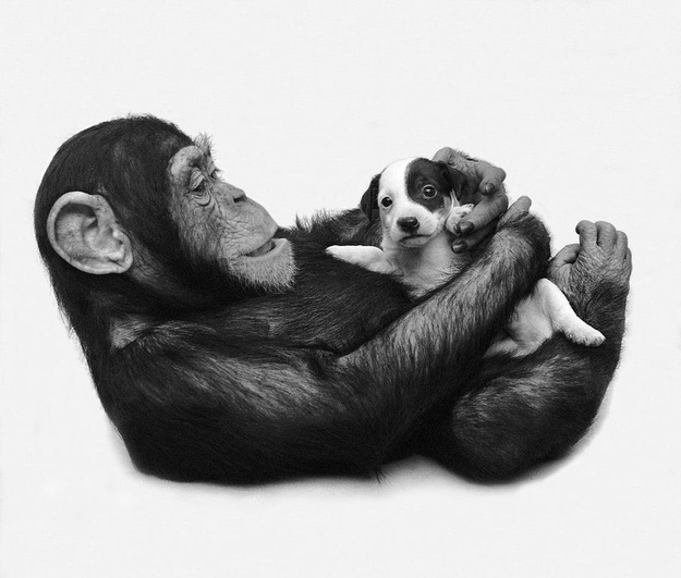 maymun-kopek