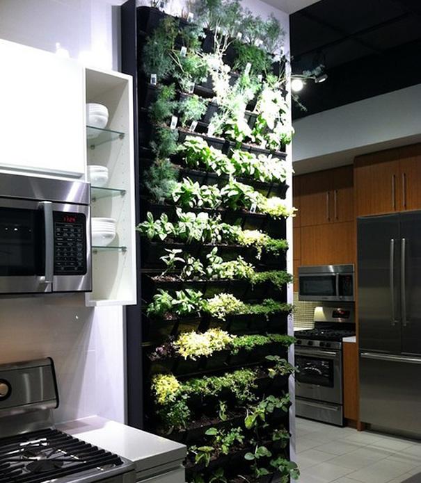 mutfakta bitki yetiştirmek