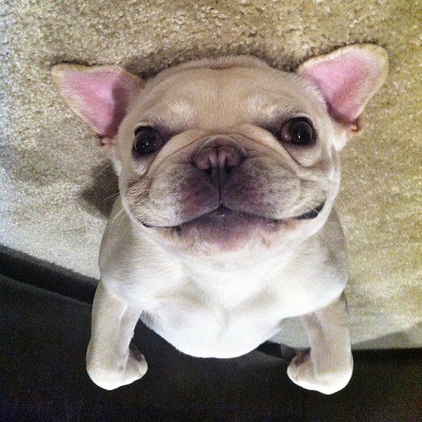 sevimli köpek fotoğrafları