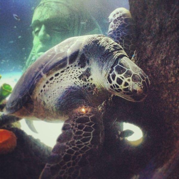 su-alti-instagram-kaplumbaga