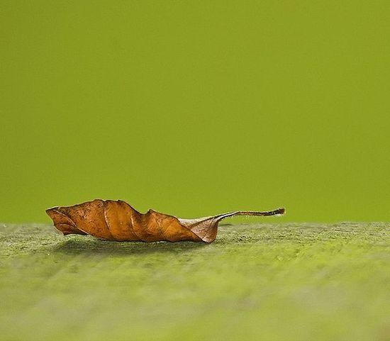 yaprak-fotografi-minimalist