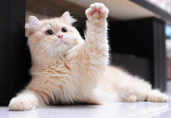 Kedinize Öğretebileceğiniz 5 Eğitim Komutu