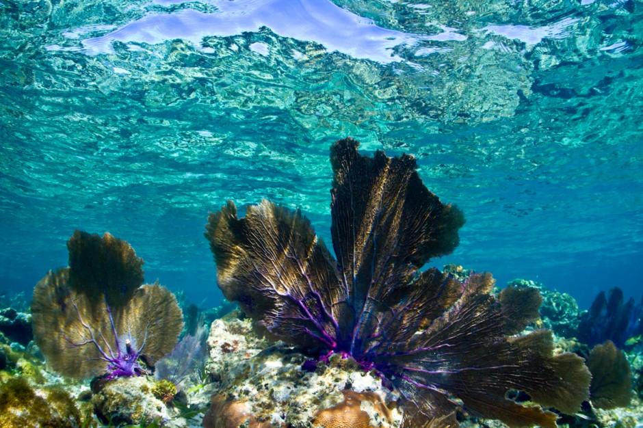 dunyanin-en-temiz-denizleri-cayos-cochinos-honduras