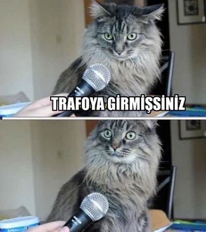 trafoya-giren-kedi